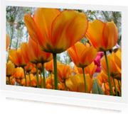 Oranje Boven Tulpen - wenskaart
