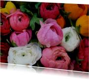 Ranonkel bloemen