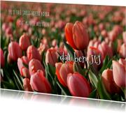 Verjaardagskaarten - Verjaardagskaart rode tulpen OT