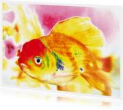 Vrolijke vis - OTTI