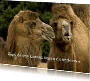 Zegt de ene kameel tegen de andere