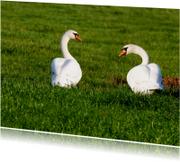 Zwanen - Swans - OTTI