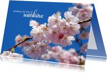Sterkte kaart sending you lots of sunshine bloesemtak