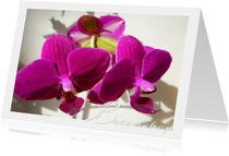 Beterschap Orchidee trio