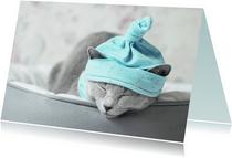 Beterschapskaart van een slapende kitten met een mutsje