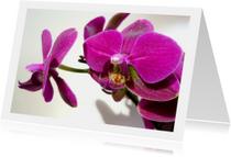 Bloemen volpaarse orchidee