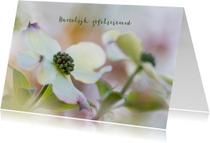 Bloemenkaart  Cornus
