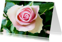 Bloemenkaart roze Roosje