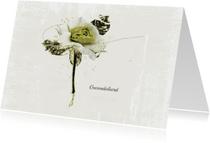 Condoleancekaart Wit Groene Roos Sterkte