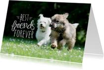 Dieren honden vriendschap