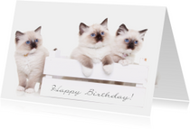 Verjaardagskaarten - Dieren Verjaardagskaart - kittens