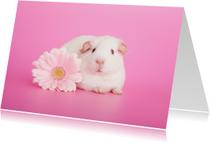 Dierenkaart | Cavia met bloem | Roze
