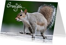 Dierenkaart groetjes eekhoorn