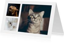 Dierenkaart met 3 foto's van je huisdieren
