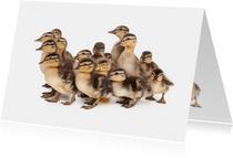 Dierenkaart - Schattige eenden kuikentjes