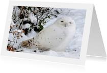 Dierenkaart Sneeuwuil