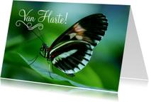 Dierenkaart Verjaardag Senior Vlinder