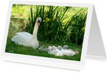 Dierenkaart Zwaantjes in gras
