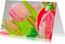 Drupppels op tulpen