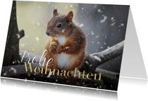 Foto-Weihnachtskarte Eichhörnchen
