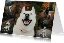 Fotokaart liggend met 5 foto's