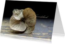 Gedroogde hortensia condoleancekaart