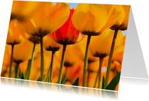 Gele tulpen in bloei