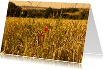 Graanveld met klaprozen
