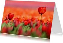 Kaart met schitterende rode tulpen