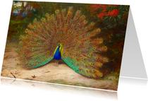 Kunstkaart van Archibald Thornburn. Pauw