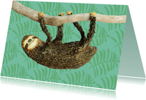 Luiaard hangt aan een tak