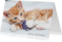 Kerstkaarten - merry Christmas kitten
