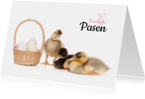 Pasen - Vrolijke paas eendjes