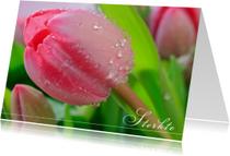Roze tulp in bloei