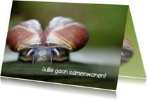 Felicitatiekaarten - samenwonende slakken