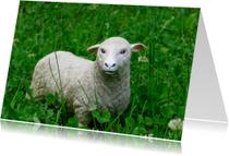 Speelgoed-schaap in het gras