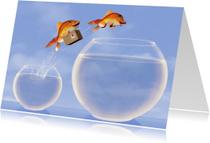 Springende vissen met verhuisdoos