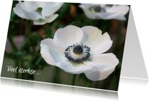Sterkte anemonen
