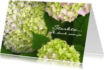 Sterkte kaart Hortensia
