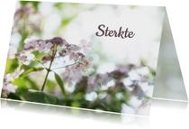 Sterkte kaarten - Sterkte kaarten bloem MM