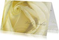 Condoleancekaarten - Veel sterkte creme roos - aanpasbaar