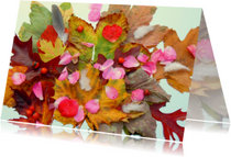 Verjaardag Herfst schatten IW