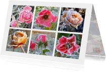 Verjaardag winterse rozen IW