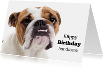 Verjaardagskaart - Happy Birthday Handsome - Bulldog