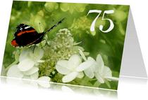 Verjaardagskaart vlinder 75