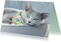 Verjaardagskat met grijze kat met groene ogen en bandana