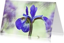 Verscholen Iris