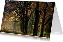 Verstild herfstbos in vriendelijk licht