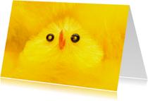 Vrolijk geel paaskuikentje