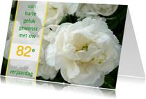 Witte felicitatie Roos-tulpen